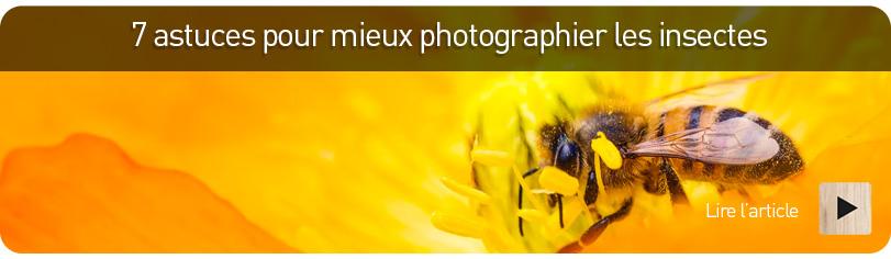 Tuto : 7 astuces pour photographier les insectes
