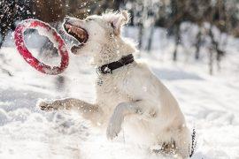 Chien jouant dans la neige par Anastasia Ulyanova