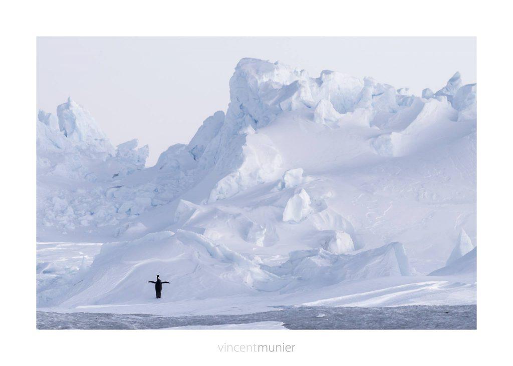 Dans les coulisses de l'expédition Wild-Touch #Antarctica! initiée par Luc Jacquet, sur les traces de l'Empereur. Manchot empereur dans une immensité de blanc