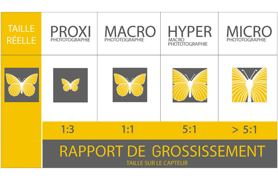 Description sous forme d'infographie du rapport de grossissement
