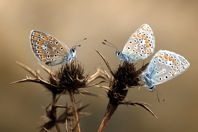 Bokeh : papillons.