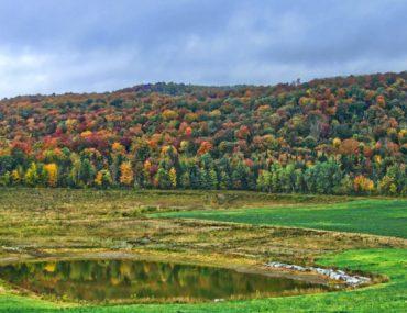 Forêt d'automne par Pascal Bernardon