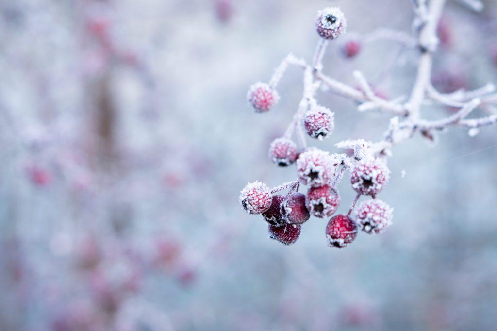 reussir ses photos d'hiver en se focalisant sur les details