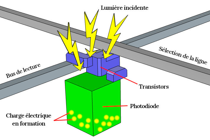 Structure d'un photosite