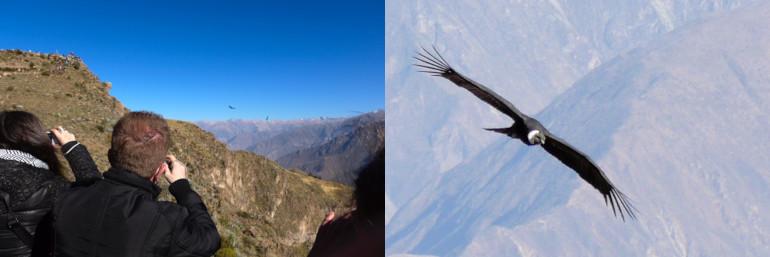 Randonnée à Cruz del Condor