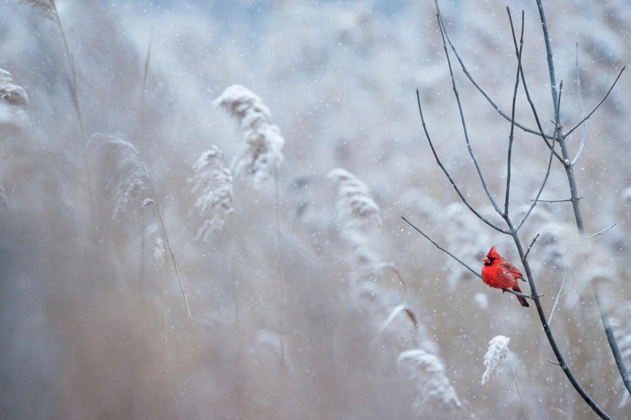 8 conseils pour des photos d'hiver parfaites